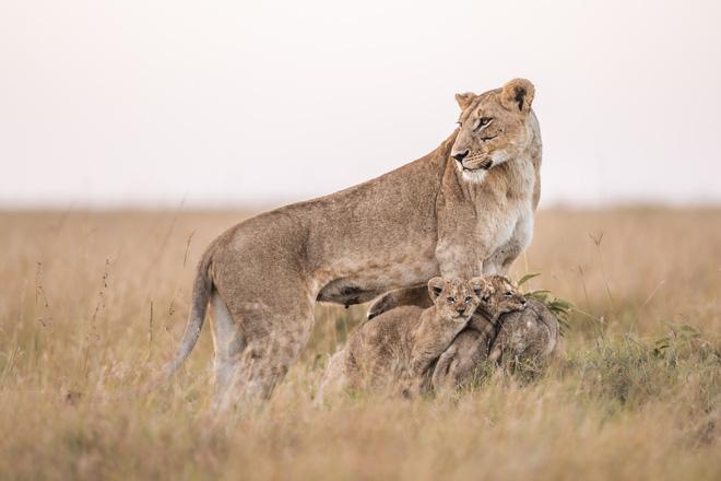 Tận dụng thời gian mắc kẹt ở Kenya do đại dịch, nhiếp ảnh gia tạo ra album ảnh động vật hoang dã ấn tượng - ảnh 12