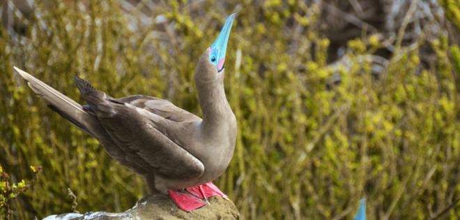 Quần đảo Galapagos: Thế giới thời tiền sử ở Thái Bình Dương! - ảnh 9