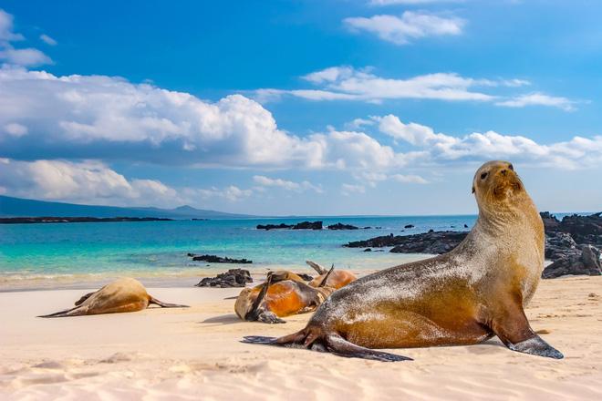 Quần đảo Galapagos: Thế giới thời tiền sử ở Thái Bình Dương! - ảnh 4
