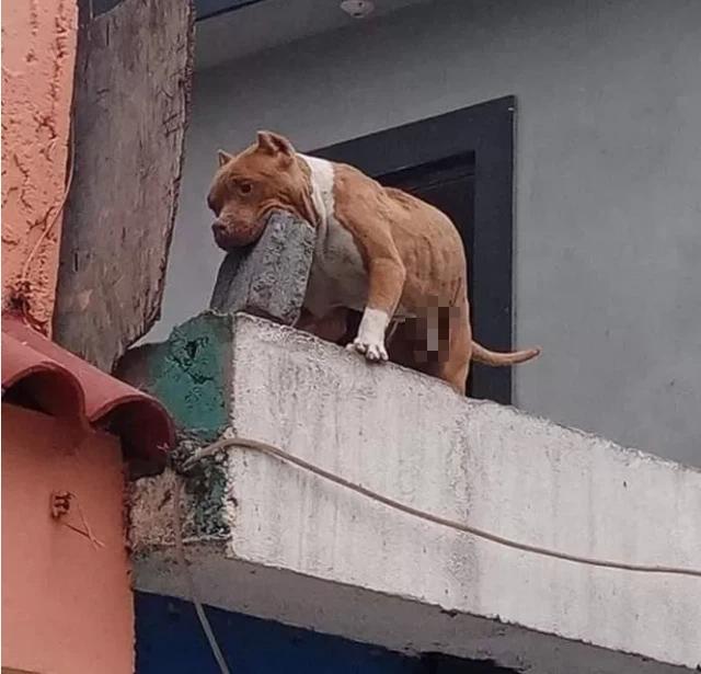 Ghét bị làm phiền, người đàn ông huấn luyện cún cưng ném gạch vào người gõ cửa khiến CĐM sửng sốt - ảnh 2
