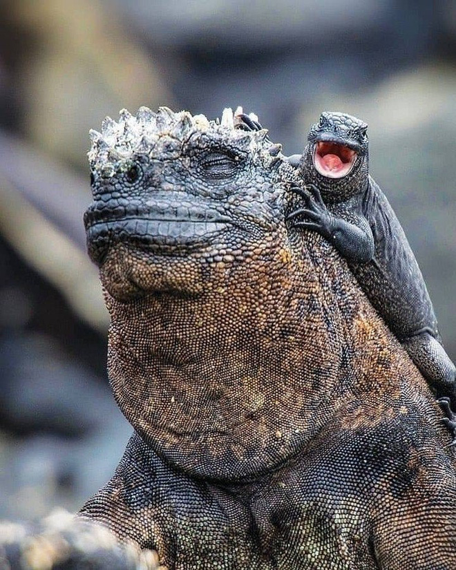 Quần đảo Galapagos: Thế giới thời tiền sử ở Thái Bình Dương! - ảnh 7