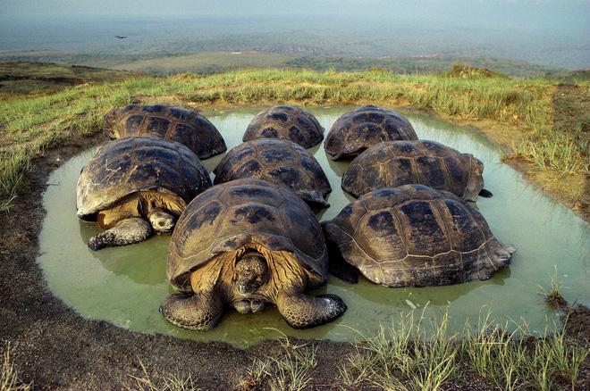 Quần đảo Galapagos: Thế giới thời tiền sử ở Thái Bình Dương! - ảnh 3