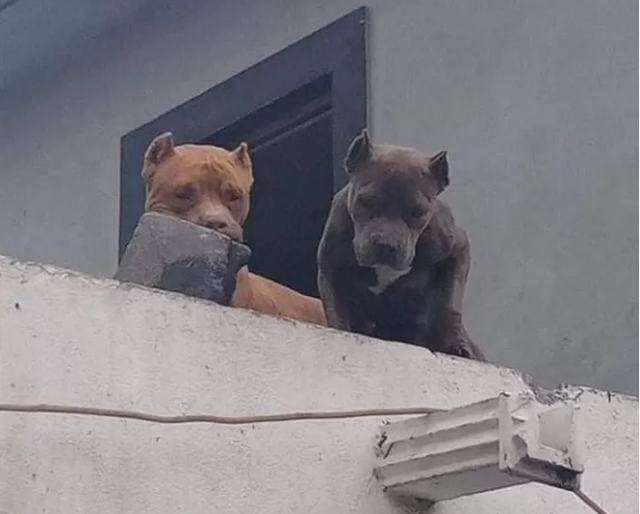 Ghét bị làm phiền, người đàn ông huấn luyện cún cưng ném gạch vào người gõ cửa khiến CĐM sửng sốt - ảnh 3