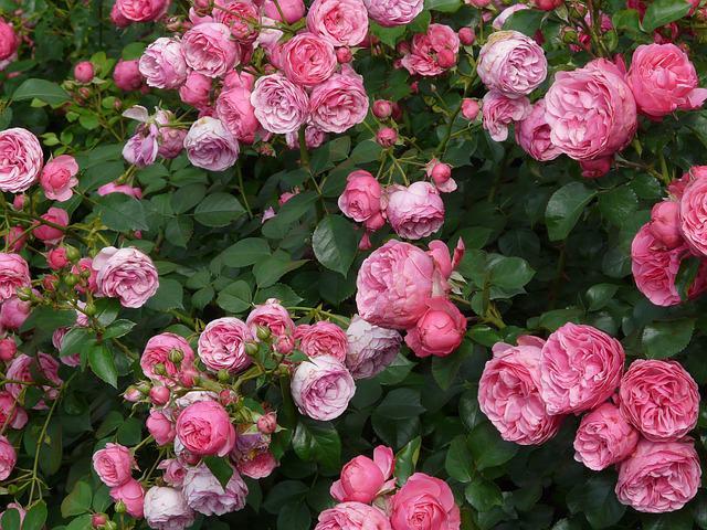 Cuối tháng 9, 4 con giáp được quý nhân chỉ lối, thành công rực rỡ, đào hoa nở rộ - ảnh 3