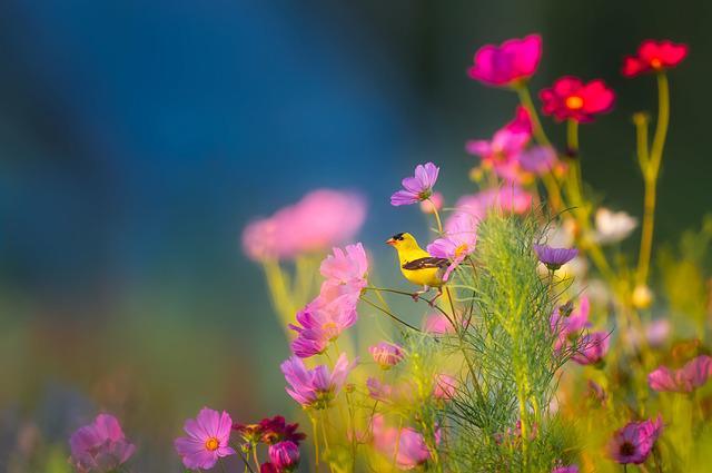 Cuối tháng 9, 4 con giáp được quý nhân chỉ lối, thành công rực rỡ, đào hoa nở rộ - ảnh 2