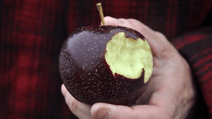Tận mục giống táo ví như 'kim cương đen', nửa triệu đồng/quả - ảnh 8