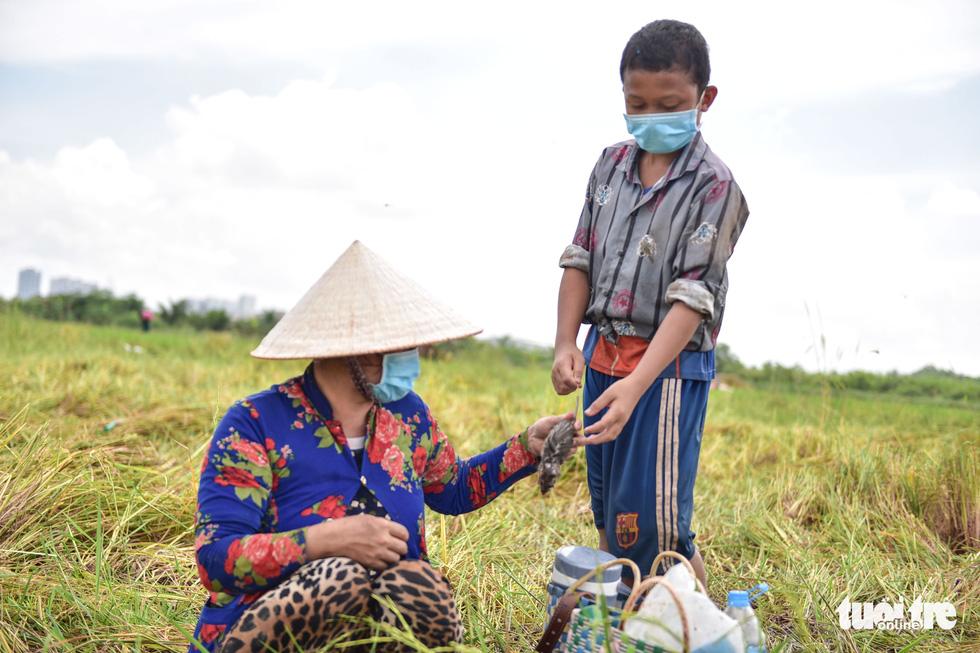 Gặt lúa, bắt cá mưu sinh giữa TP.HCM trong mùa dịch - ảnh 10