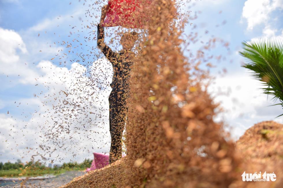 Gặt lúa, bắt cá mưu sinh giữa TP.HCM trong mùa dịch - ảnh 8