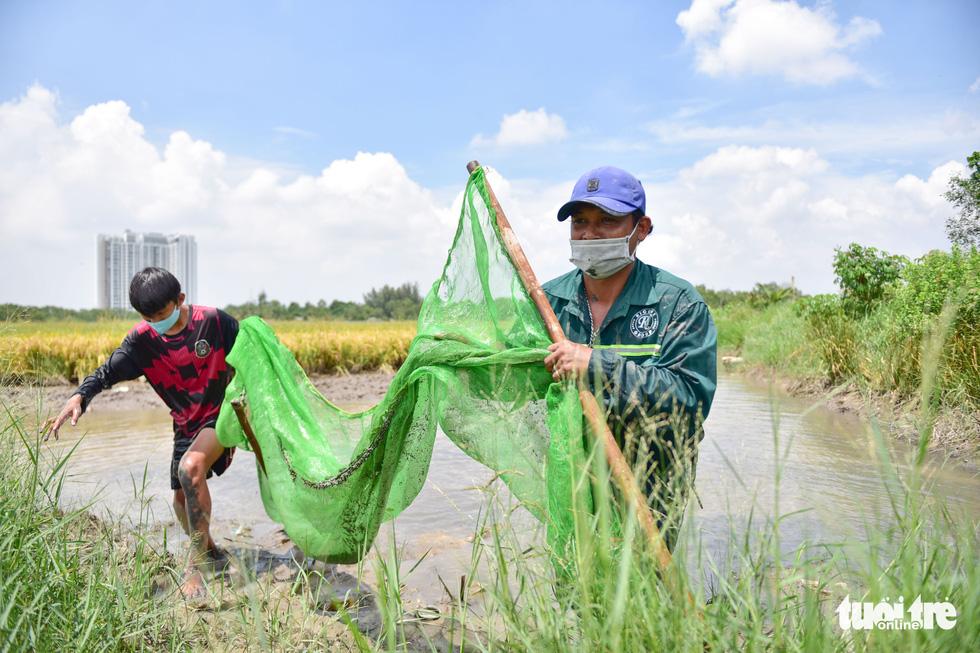 Gặt lúa, bắt cá mưu sinh giữa TP.HCM trong mùa dịch - ảnh 11