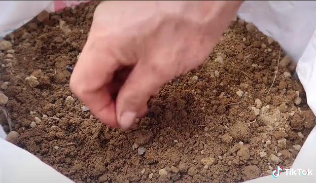 Người đàn ông dạy cách trồng cả một vườn dưa ngay tại ban công sai quả đến mức mắc võng cho dưa nằm xếp cả hàng dài - ảnh 1