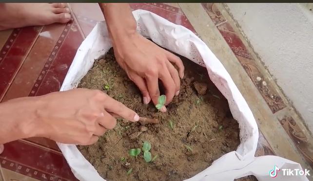 Người đàn ông dạy cách trồng cả một vườn dưa ngay tại ban công sai quả đến mức mắc võng cho dưa nằm xếp cả hàng dài - ảnh 2