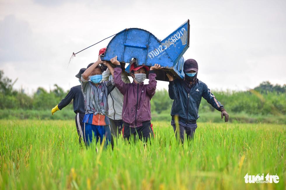 Gặt lúa, bắt cá mưu sinh giữa TP.HCM trong mùa dịch - ảnh 5