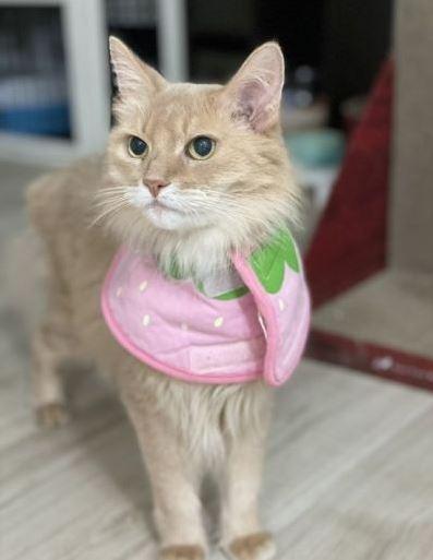 Dứt ruột bán xe cổ để cứu mèo cưng bị bệnh hiểm nghèo, chủ nhân nhận lại bất ngờ từ người mua giấu mặt - ảnh 6