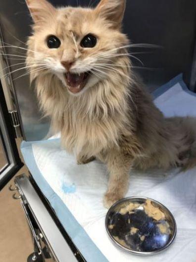 Dứt ruột bán xe cổ để cứu mèo cưng bị bệnh hiểm nghèo, chủ nhân nhận lại bất ngờ từ người mua giấu mặt - ảnh 2