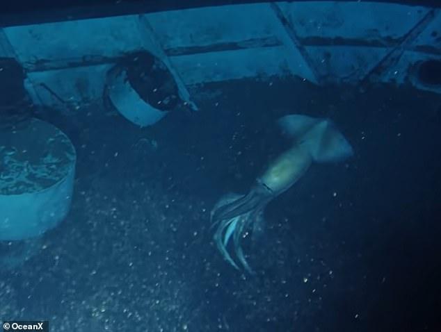 Khám phá xác tàu đắm, không ngờ phát hiện mực xà khổng lồ - ảnh 2