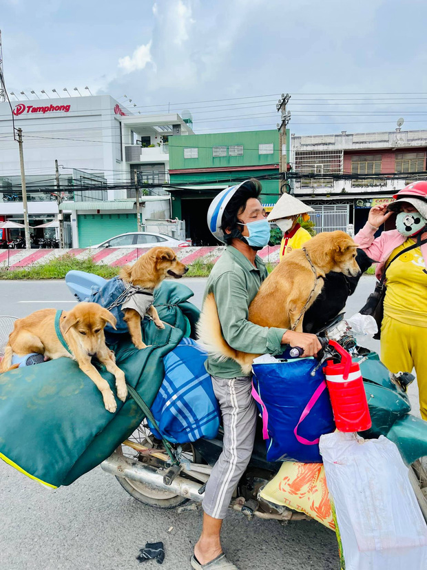 Vụ đàn chó 15 con bị tiêu huỷ: 1 chú cún may mắn sống sót, người chủ mới khẳng định