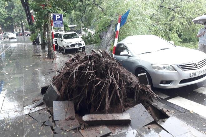 Cây me cổ thụ bật gốc đè bẹp xe Camry trong cơn mưa lớn ở Hà Nội - ảnh 2