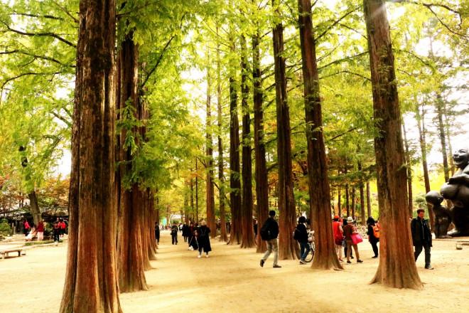 Đảo Nami mùa thu đẹp ma mị, mê đắm du khách - ảnh 7
