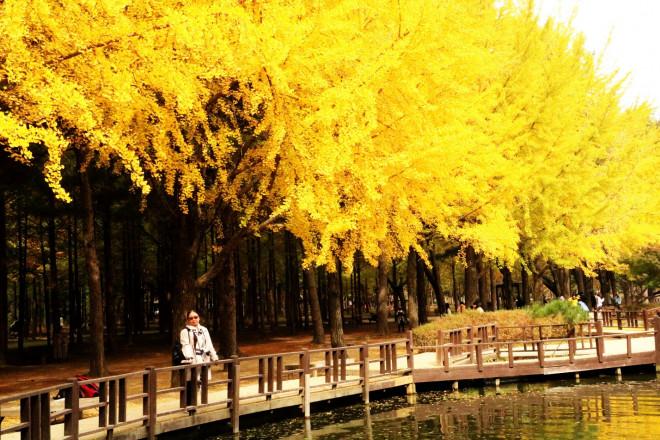 Đảo Nami mùa thu đẹp ma mị, mê đắm du khách - ảnh 2