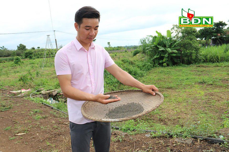 Đắk Nông: Nghỉ việc ở Đồng Nai, trai đẹp về làng trồng mồng tơi tuốt hạt phơi khô bán vô Sài Gòn - ảnh 3