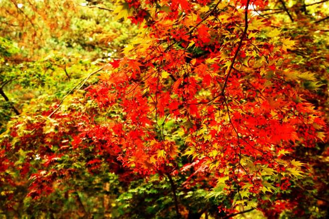 Đảo Nami mùa thu đẹp ma mị, mê đắm du khách - ảnh 5
