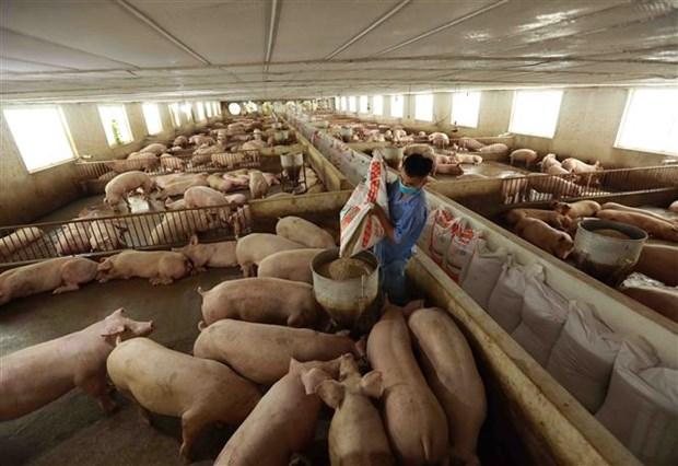 Giá thịt lợn tại các chợ vẫn cao dù giá lợn hơi giảm mạnh - ảnh 1