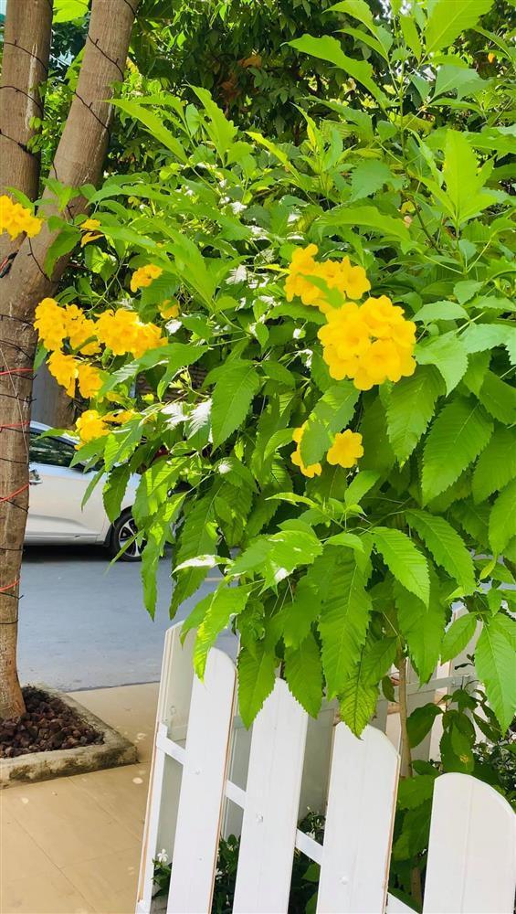 Vy Oanh khoe cận cảnh biệt thự ngập sắc hoa chồng tặng - ảnh 12