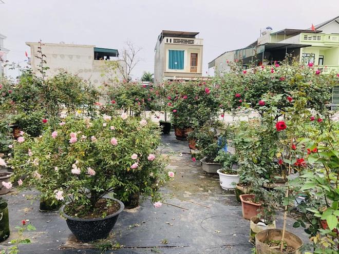 Gia chủ Thanh Hóa làm vườn hồng hơn trăm gốc tặng người thân - ảnh 2