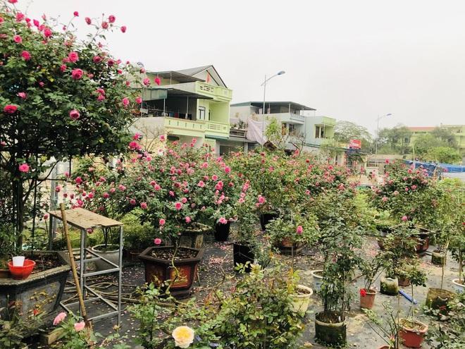 Gia chủ Thanh Hóa làm vườn hồng hơn trăm gốc tặng người thân - ảnh 12