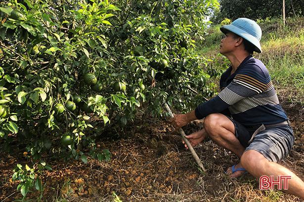 Bão số 8 sắp đổ bộ: Nông dân Hương Sơn