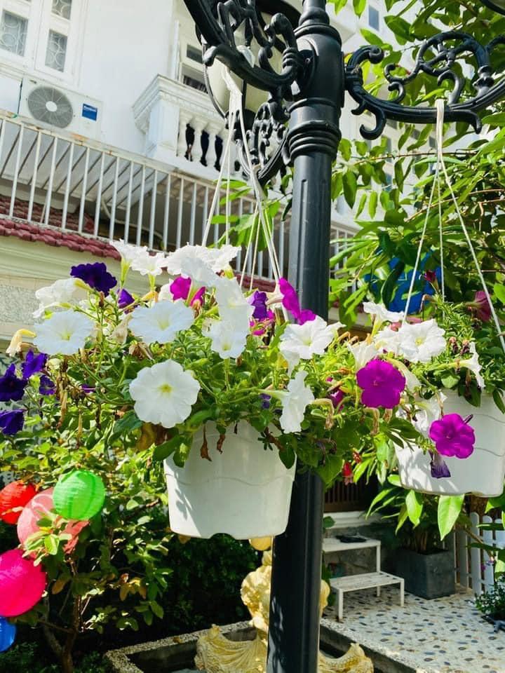 Vy Oanh khoe cận cảnh biệt thự ngập sắc hoa chồng tặng - ảnh 16
