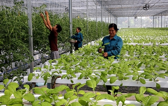 Lạng Sơn: Đẩy mạnh phát triển nông nghiệp hàng hóa tập trung