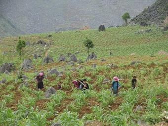 Gây quỹ trồng mới 1 triệu cây xanh khôi phục rừng đầu nguồn Mèo Vạc