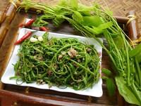 Loại rau dại tên cực xấu nhưng vị ngon, nhiều tác dụng chữa bệnh, lọt top đặc sản Việt Nam