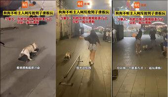 Chú mèo đi vệ sinh bằng 2 chân gây sốt mạng xã hội