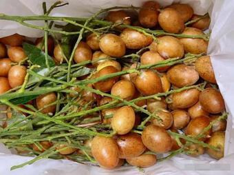 Quất hồng bì vốn chỉ trong mùa hè mới có! Tranh thủ làm 4 món ăn tại nhà, vừa bổ dưỡng lại thơm ngon