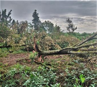 Vĩnh Long: Mưa giông làm sập và tốc mái 75 căn nhà, 1 người tử vong