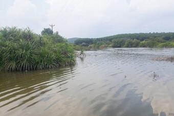Phát hiện 1 thi thể nam giới trong đầm nuôi cá ở Quảng Ninh