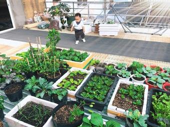 Chàng trai Sài Gòn biến mái nhà bếp thành vườn xanh mát tặng mẹ