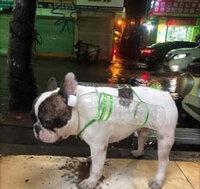 Cún cưng được chủ nhà gắn bảo bối chống lụt