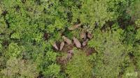 Giải cứu voi con bị thương lạc đàn ở Trung Quốc