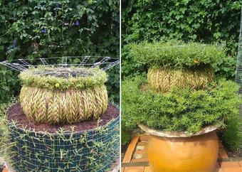 9X khởi nghiệp với hoa mười giờ bonsai, thu hàng chục triệu đồng mỗi tháng