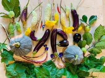 Mảnh vườn 300 m2 sum suê rau trái, thu hoạch mỏi tay của mẹ đảm Quảng Ninh
