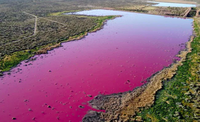 Nước trong đầm phá ở Argentina chuyển màu bất thường