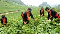 Triển khai Chương trình mục tiêu quốc gia phát triển kinh tế xã hội vùng dân tộc thiểu số, miền núi