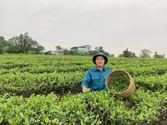 Cất bằng cử nhân báo chí, 9X về quê làm trà ướp sen bán chục triệu đồng/kg