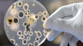 """Mỹ phát hiện ca bệnh nấm nguy hiểm chết người có thể """"kháng mọi loại thuốc"""""""