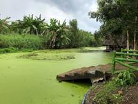 Lạc bước vào vương quốc thiên nhiên hoang dã ở khu bảo tồn Lung Ngọc Hoàng Hậu Giang