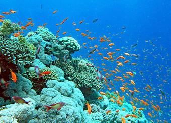 Bảo tồn hệ sinh thái rạn san hô trên vịnh Hạ Long