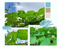 """Giới trẻ Sài Gòn tự trồng cả vườn rau, hóa giải """"bài toán"""" thực phẩm mùa dịch"""